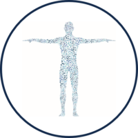 Icon for the Antigen Atlas - representing a human body with a multitude of cellular connections