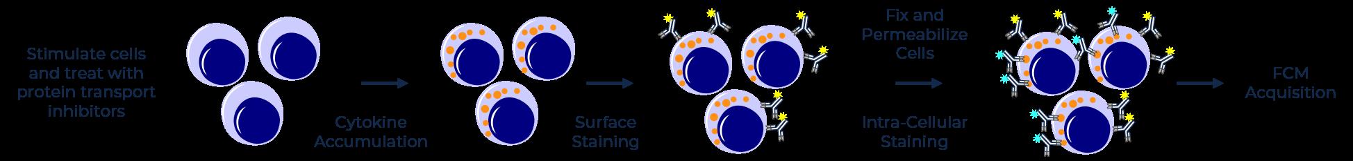 Experimental design of ICS