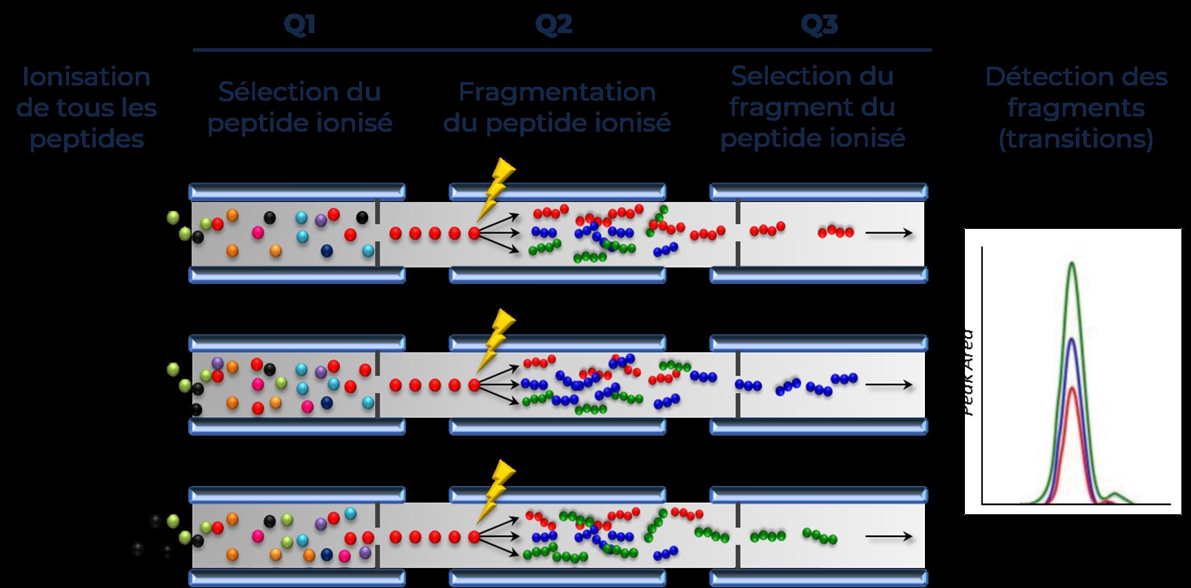 spectromètres de masse quadripôle triples ou hybrides quadripôle triples