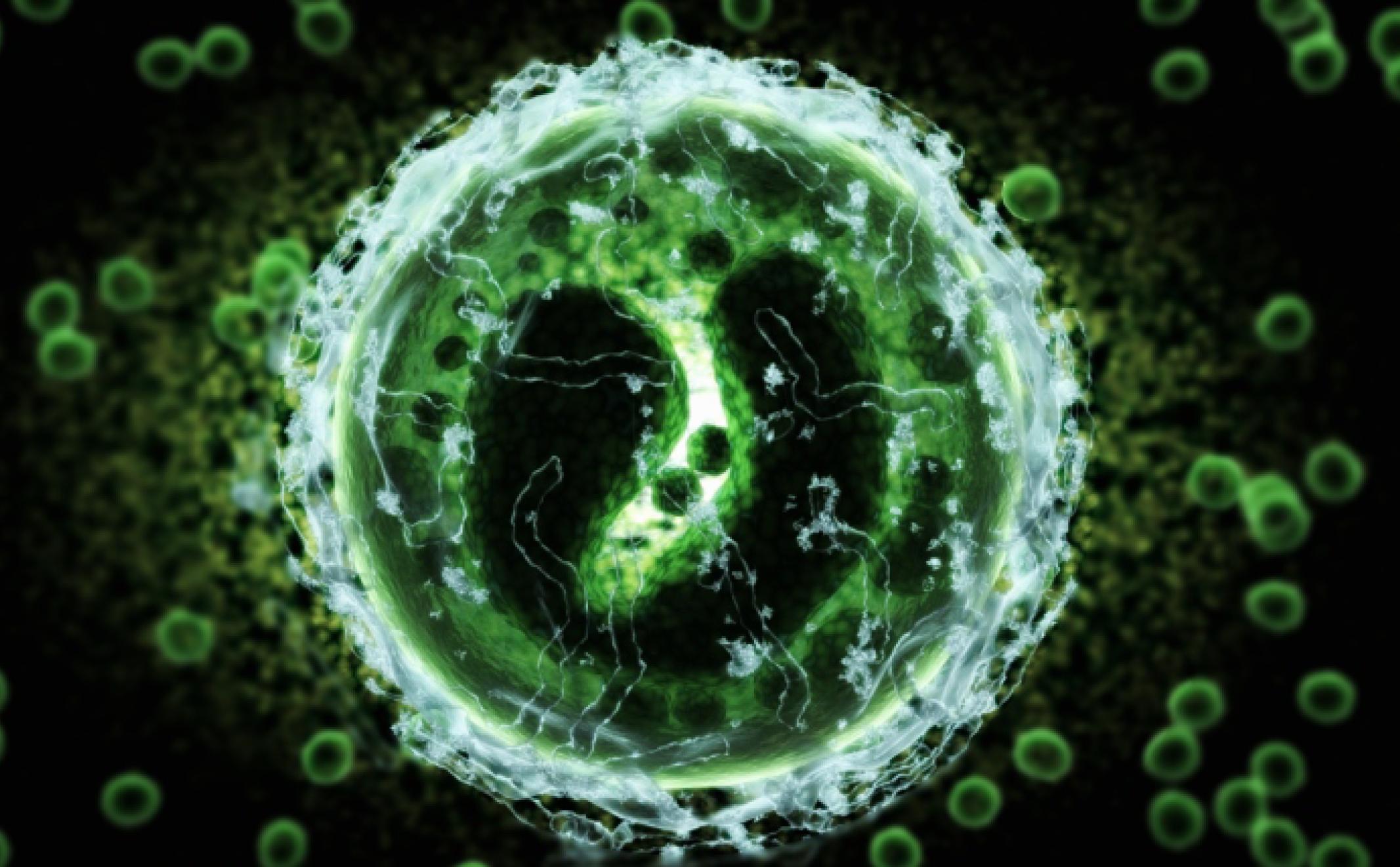 Tests des Cellules Myéloïdes Suppressives